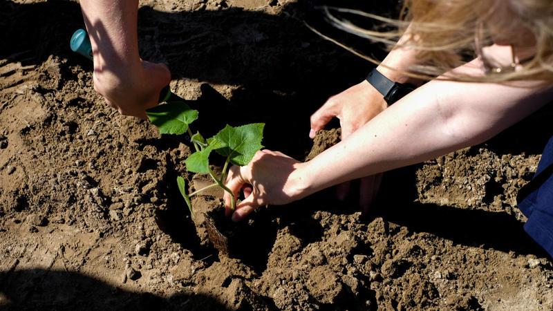 Pod Warszawą przybyło 600 nowych drzew tlenowych